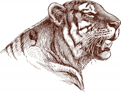 Image tigre rugissant