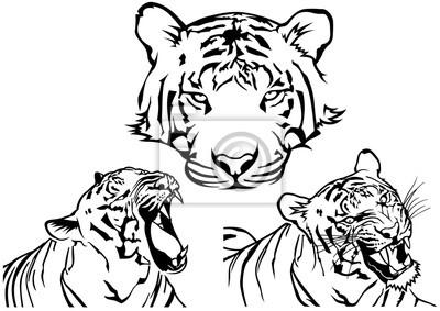 Tigre Tatouage Dessins Noir Et Blanc Illustrations Vecteur