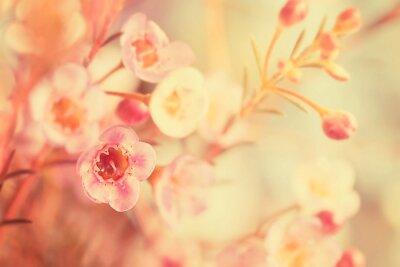 Image Tonique doux et fleur de foyer doux
