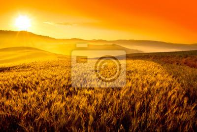 Image Toscane champ de blé colline au lever du soleil