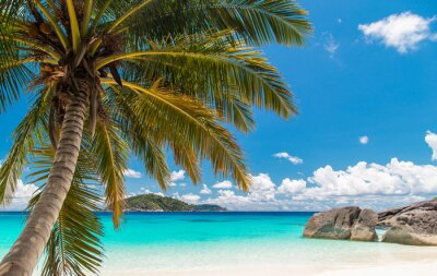 Image Touched tropical beach in similan island,Coconut tree or palm tree on the Beach.