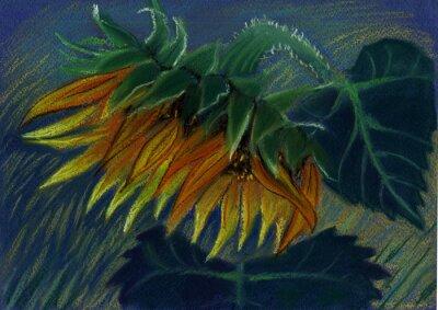 Image tournesol. pastel