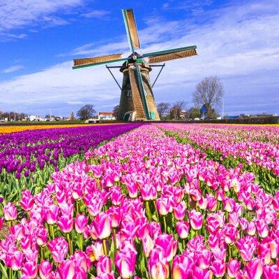 Image Traditionnel, hollandaise, campagne, éoliennes, tulipes