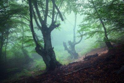 Image Trail à travers une mystérieuse forêt sombre dans le brouillard. L'automne