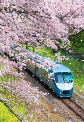 Image Train du Japon en fleur de cerisier de Sakura à Yamakita, préfecture de Kanagawa