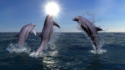 Image Trois dauphins