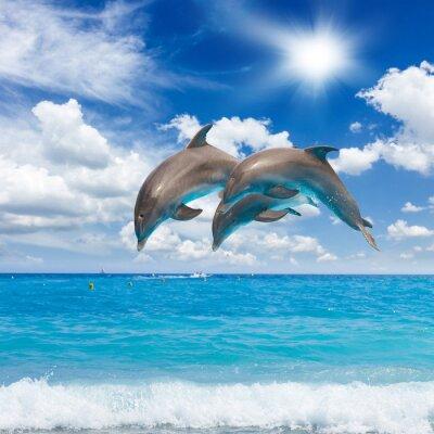 Image trois dauphins sautant