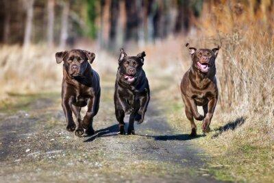 Image Trois, heureux, chiens, fonctionnement, ensemble