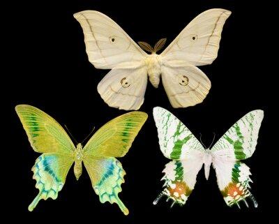 Image Trois, papillons, isolé, noir
