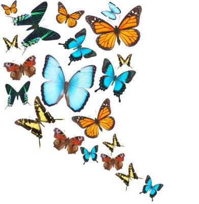 Image Tropicale, papillons, ensemble