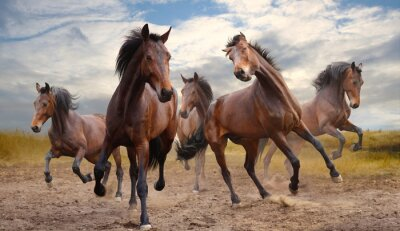 Image troupeau de chevaux