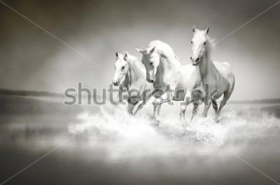 Image Troupeau de chevaux blancs traversant l'eau