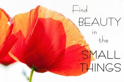 Image Trouver la beauté dans les petites choses. Motivation inspirant devis