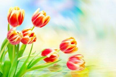 Image Tulipe, fleurs, fin, haut