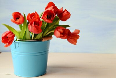 Image Tulipes