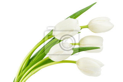 Image Tulipes blanches isolé sur blanc