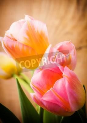 Image Tulipes, fond floral.