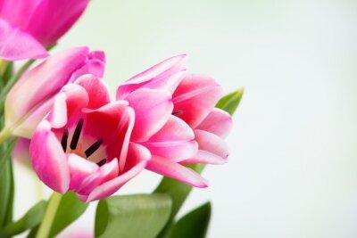 Image Tulpenblüten