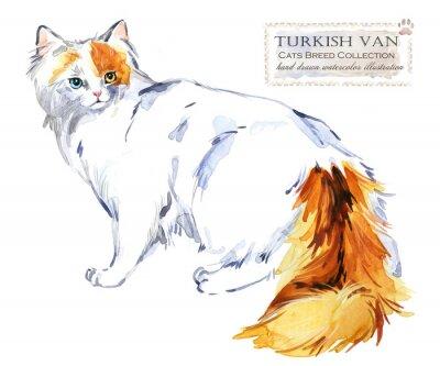 Turkish Van cat. home pet. breed of Cats series. cute kitten. watercolor domestic animal illustration.