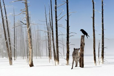 Image Two seconds to live - Wolf and Raven