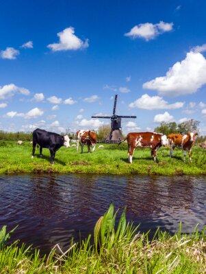 Image Typique, hollandais, paysage, vaches, pré, moulin à vent, eau