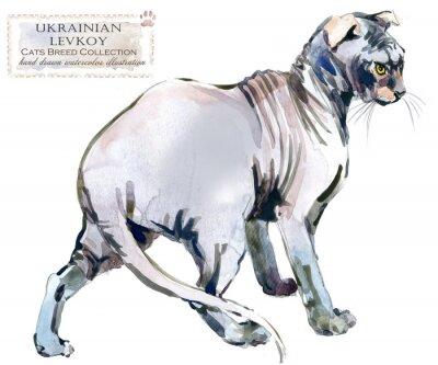 Ukrainian Levkoy cat. home pet. breed of Cats series. cute kitten. watercolor domestic animal illustration.