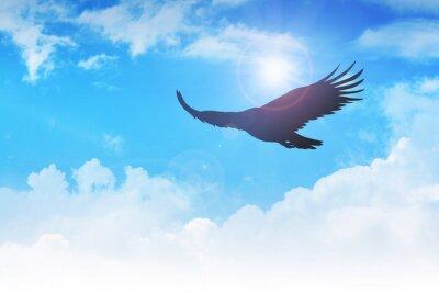 Image Un aigle qui volait dans l'air
