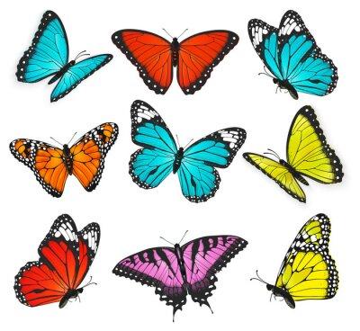 Image un ensemble de coloré réaliste papillons illustration