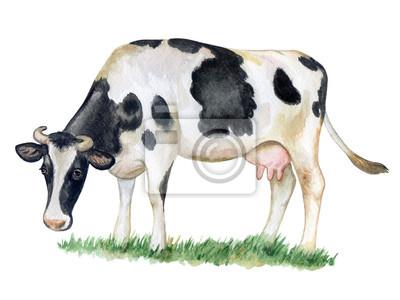 Vache noire et blanche isolée sur fond blanc. aquarelle