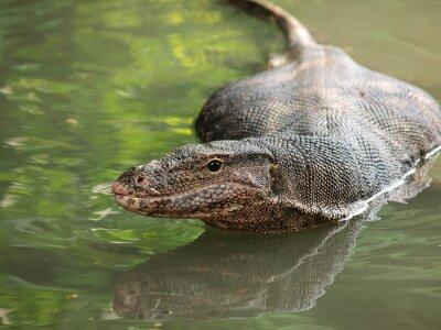 Image Varan sauvage sur l'eau, Focus sur l'oeil varan.
