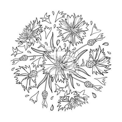 Image Vecteur Rond Bouquet Avec Contour Fleur De Bleuet Centaurée
