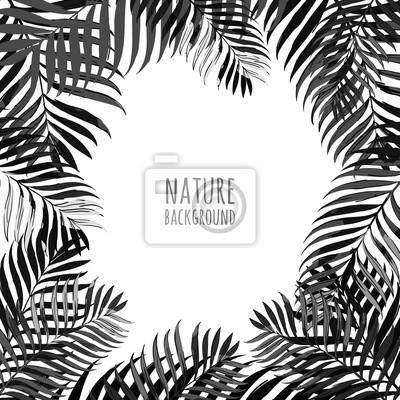 Vector Cadre Avec Des Feuilles De Cocotier Sur Fond Blanc Floral