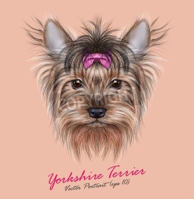 Image Vector portrait d'un chien domestique. Mignon tête de Yorkshire Terrier sur fond de ping.