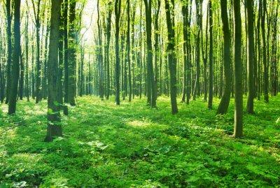 Image vert forêt