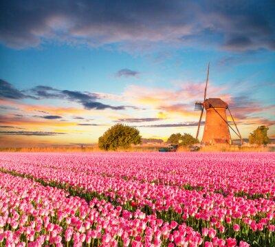 Image Vibrant, tulipes, champ, hollandais, éolienne