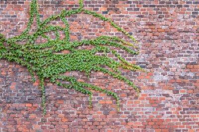 Image Vieux, rouge, brique, mur, envahi, lierre