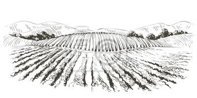 Image Vine hills landscape. Vector line sketch illustration