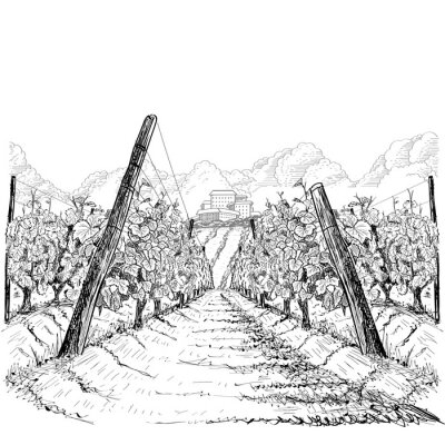 Image Vineyard landscape with clouds and building on the hill. Hand drawn sketch vector illustration on white