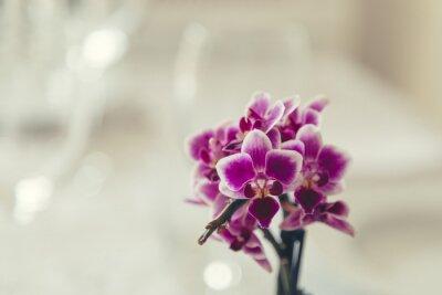 Image Violet, fleur, fleur, crémeux, blanc, fond