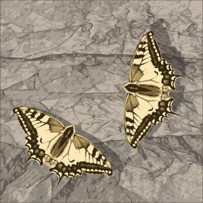 Image Voler papillon sur mur grunge.