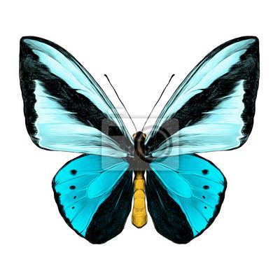 Dessin Papillon En Couleur vue marquée symétrique du papillon des couleurs bleu clair et