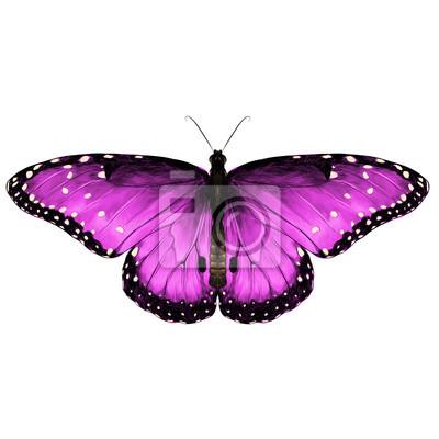 Dessin Papillon En Couleur vue marquée symétrique du papillon rose avec des taches, dessin