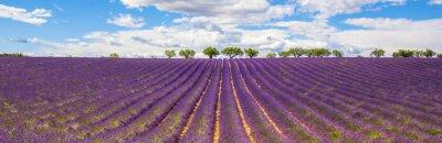 Image Vue panoramique du champ de lavande