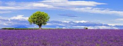 Image Vue panoramique du champ de lavande avec arbre