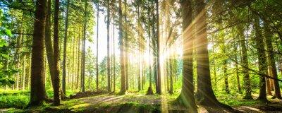 Image Waldpanorama avec des rayons de soleil