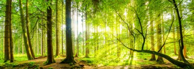 Image Waldpanorama avec sunbeams