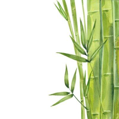 Image watercolor bamboo stalks