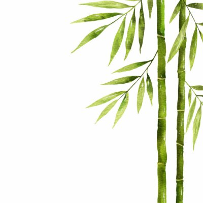 Image Watercolor bamboo stem with green leaves and copy space.