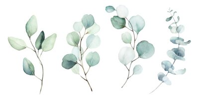 Image Watercolor floral illustration set - green leaf branches collection, for wedding stationary, greetings, wallpapers, fashion, background. Eucalyptus, olive, green leaves, etc.