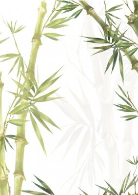 Image Watercolor illustration painting of bamboo leaves , on white background